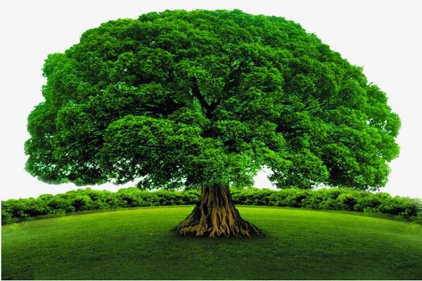Mơ thấy cây cối mang đến điềm báo gì?