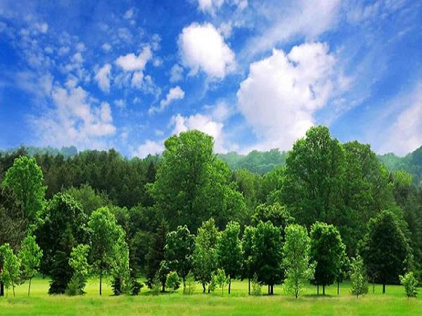 Tại sao lại mơ thấy cây cối?