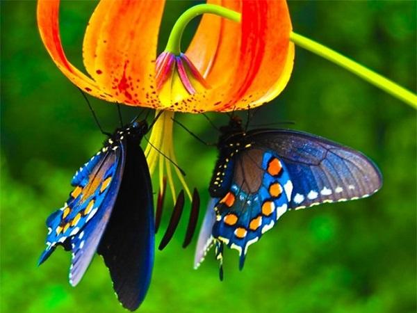 Điềm báo trong giấc mơ thấy con bướm