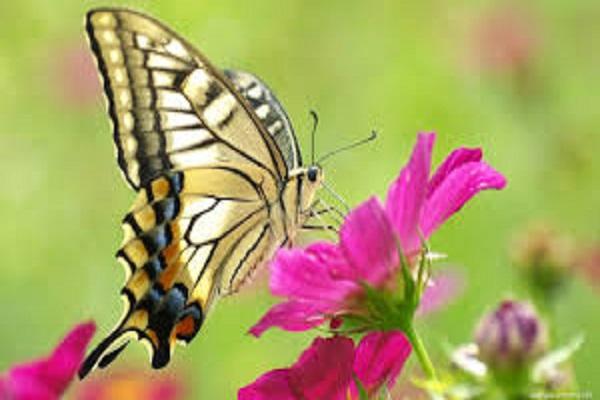 Lý giải ý nghĩa về giấc mơ thấy con bướm