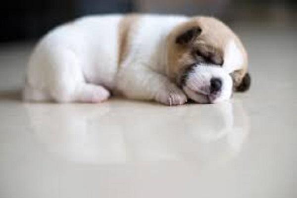 Tại sao lại mơ thấy con chó