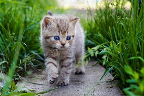 Mơ thấy con mèo mang đến điềm báo gì?