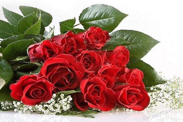 Ý nghĩa mơ thấy hoa hồng