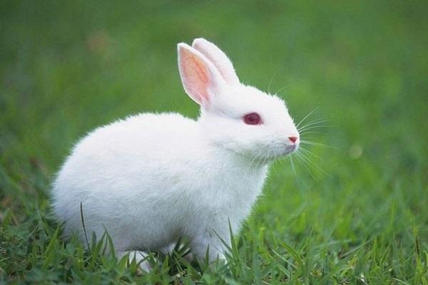 Điềm báo trong giấc mơ thấy con thỏ