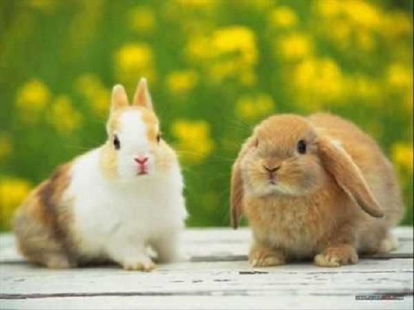 Ý nghĩa giấc mơ thấy con thỏ