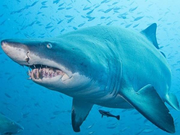 Điềm báo trong giấc mơ thấy cá mập.