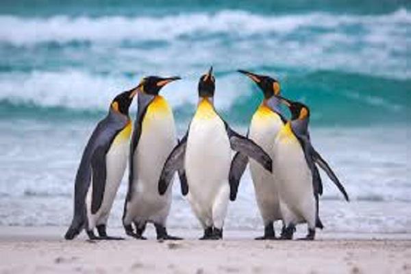Điềm báo trong giấc mơ thấy chim cánh cụt