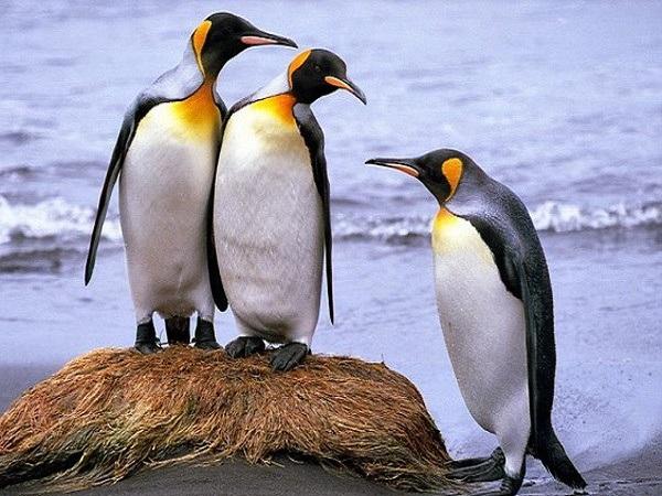 Vì sao lại mơ thấy chim cánh cụt