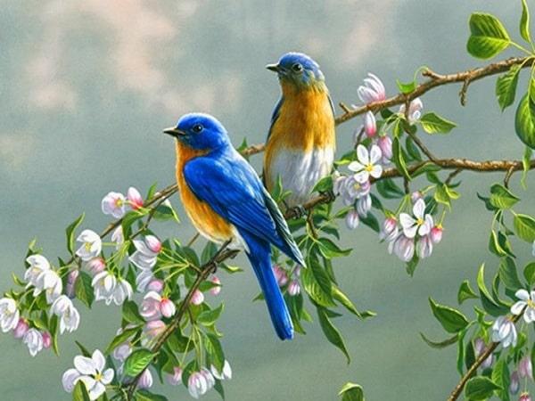 Mơ thấy chim đậu sẽ mang đến điềm báo may mắn