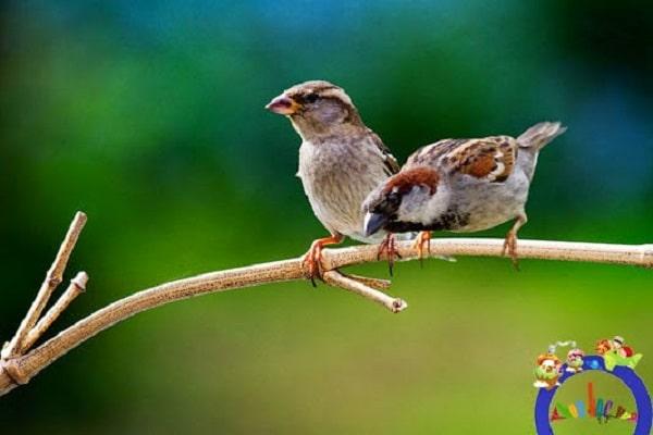 Điềm báo trong giấc mơ thấy chim đậu