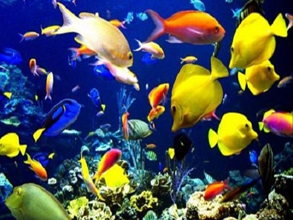 Dự đoán kết quả xố số miền bắc khi mơ thấy cá