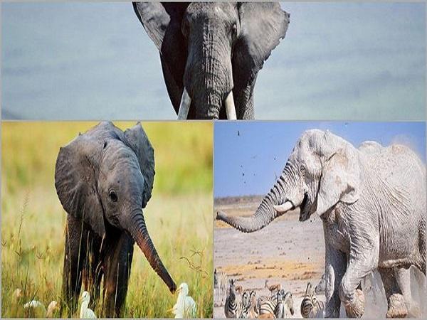 Nằm mơ thấy con voi có ý nghĩa như thế nào