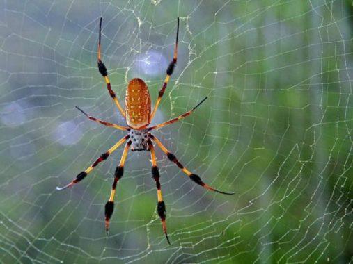 Chiêm bao mơ thấy con nhện đánh đề con gì?