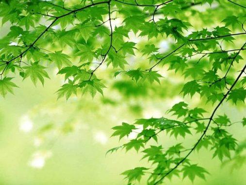 Phân tích ý nghĩa giấc mơ thấy màu xanh và những điềm báo lành dữ