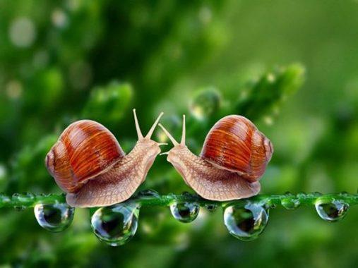 Mơ thấy ốc đánh con gì may mắn – Thực hư giấc mơ thấy ốc?