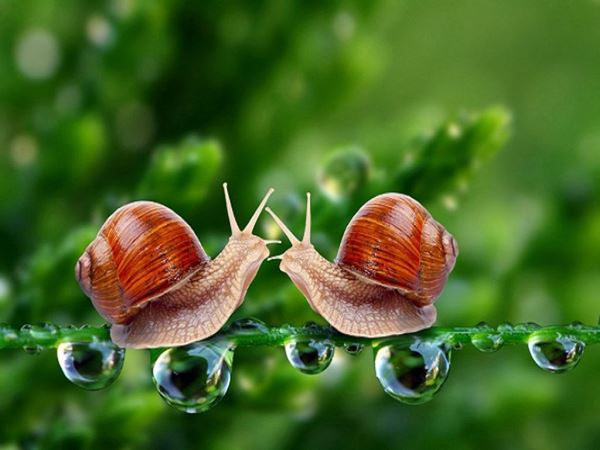 Mơ thấy ốc đánh con gì may mắn - Thực hư giấc mơ thấy ốc?
