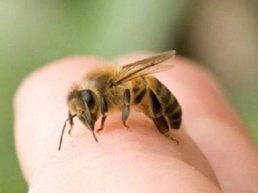 Mơ thấy ong có bí ẩn gì – Luận giải tốt xấu giấc mơ thấy ong?