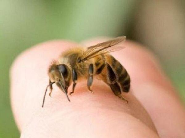 Mơ thấy ong có bí ẩn gì - Luận giải tốt xấu giấc mơ thấy ong?