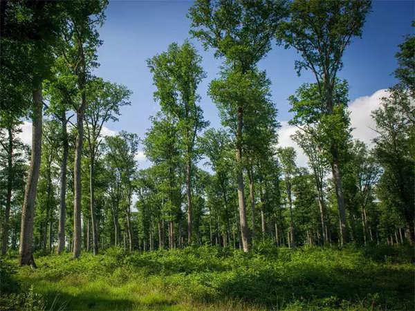 Mơ thấy rừng rậm là điềm báo tốt hay xấu?