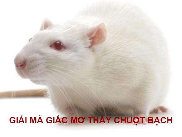 Giải mã giấc mơ thấy chuột bạch là điềm báo gì