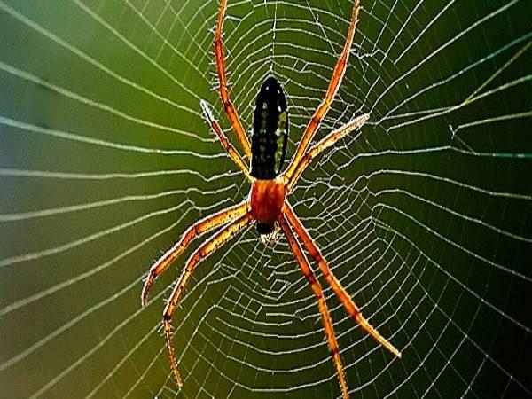 Nằm mơ thấy nhện đánh xổ số con gì may mắn