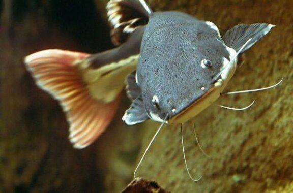 Nằm mơ thấy cá trêđánh số mấy đánh xổ số hôm nay con gì