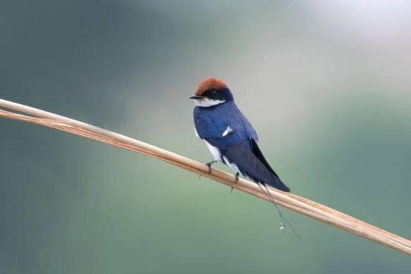 Nằm mơ thấy chim én đánh số mấy đánh con gì hôm nay đẹp nhất