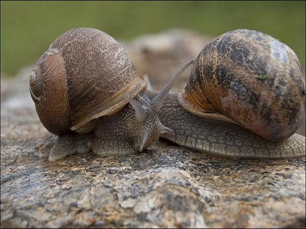 Nằm mơ thấy con ốc có điềm báo gì tốt hay xấu