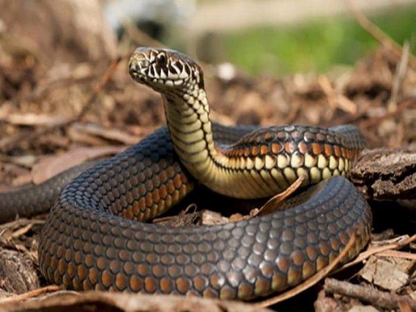 Nằm mơ thấy rắn đuổi có ý nghĩa gì, đánh lô đề con gì dễ trúng