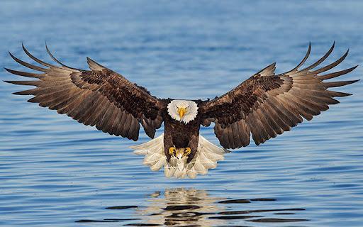 Mơ thấy chim đại bàng là đánh con gì? Ý nghĩa giấc mơ