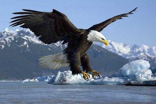 Giải mã giấc mơ thấy chim đại bàng là điềm báo gì