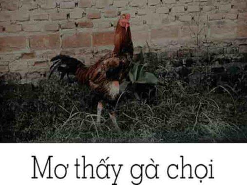 Chiêm bao mơ thấy gà chọi đánh con gì? số mấy?