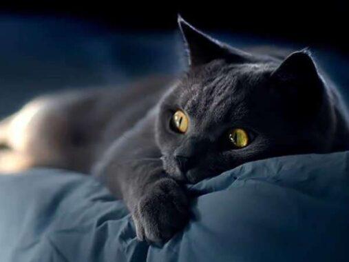 Nằm mơ thấy mèo đen đánh lô số mấy ? Là điềm gì ?